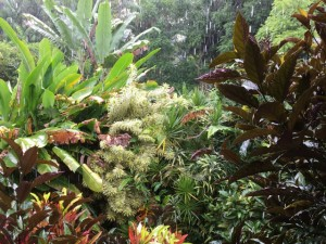 Tropical rain forest of Kaua'i in the rain!