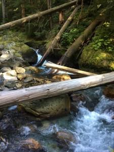 Storm-downed trees in Sulphur Creek