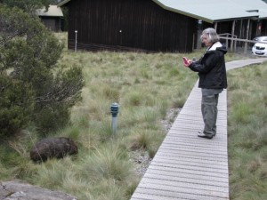 Christina taking a photo of a wombat in Australia