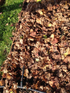 Garden bed covered with leaves