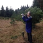 Ann collecting the tree