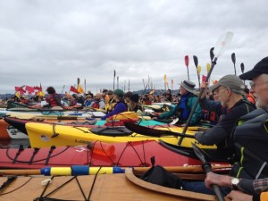 Kayaks all lined up