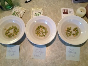 Soaking different kinds of peas before planting and keeping them organized
