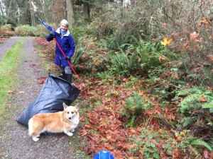 Ann raking leaves one week after the election—preparing for winter and what lies ahead
